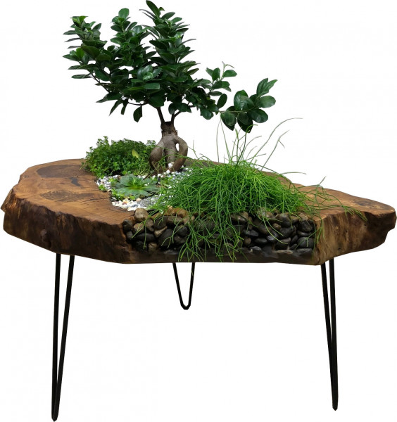 Botanik Lounge Deko Tisch Massivholz Unikat